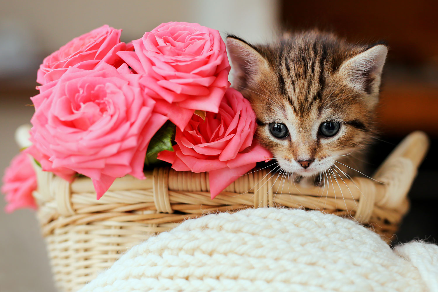 A small little kitten sitting on a small wooden basket next to pink roses