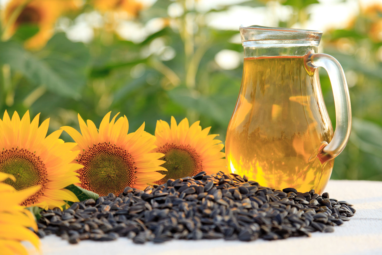 Sunflowers, sunflower seeds and a pitcher with sunflower oil on the table