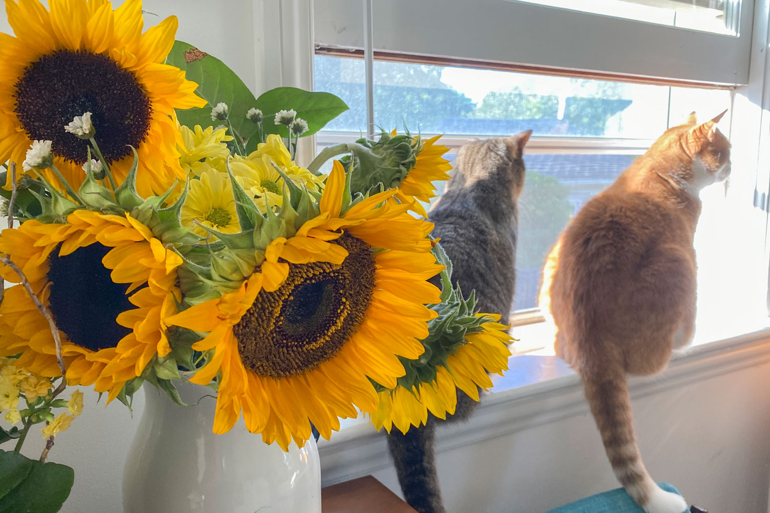 Two cute cats sitting near the window with a sunflower in a vase upfront