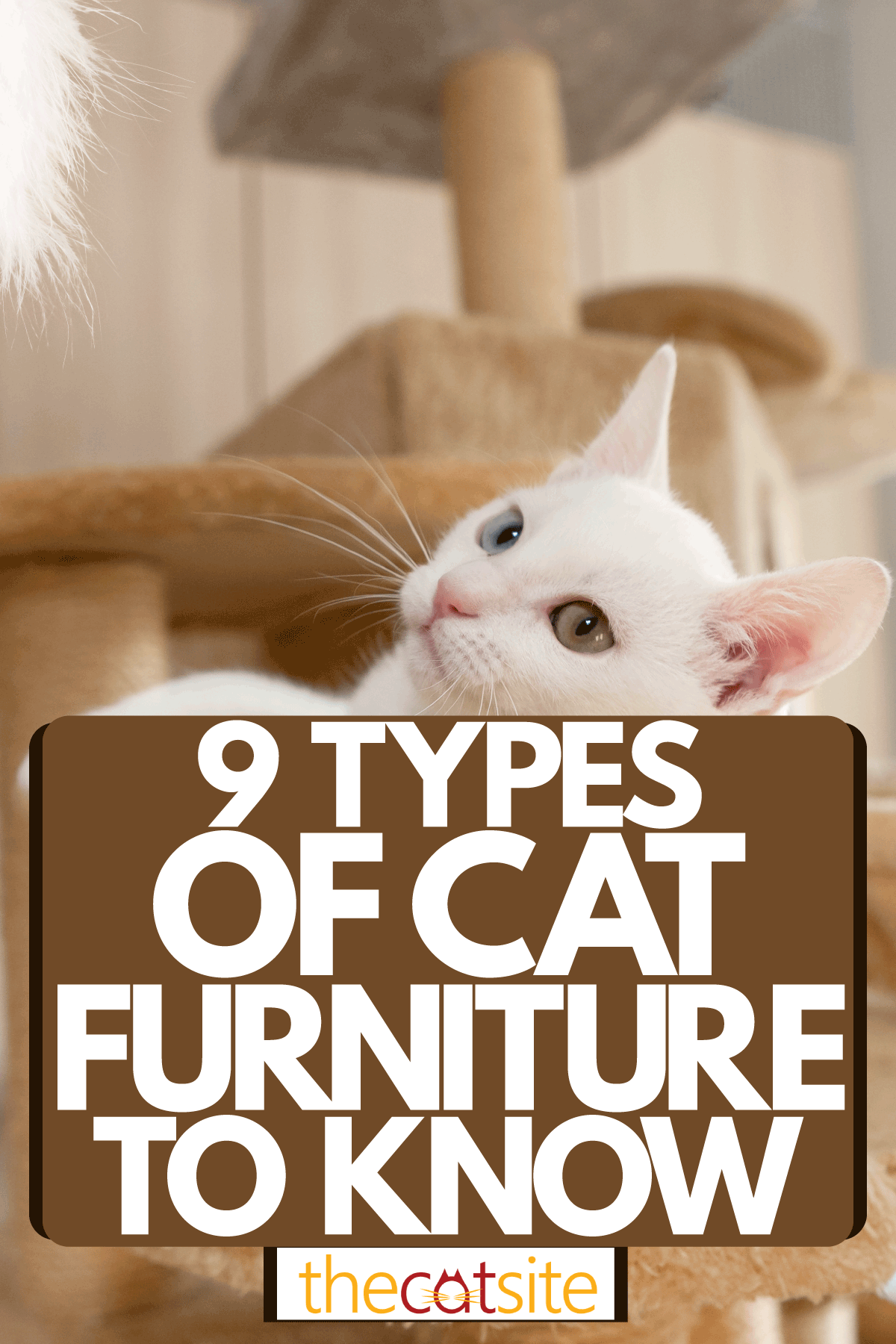 9 Types Of Cat Furniture : cat lying on a small playing platform