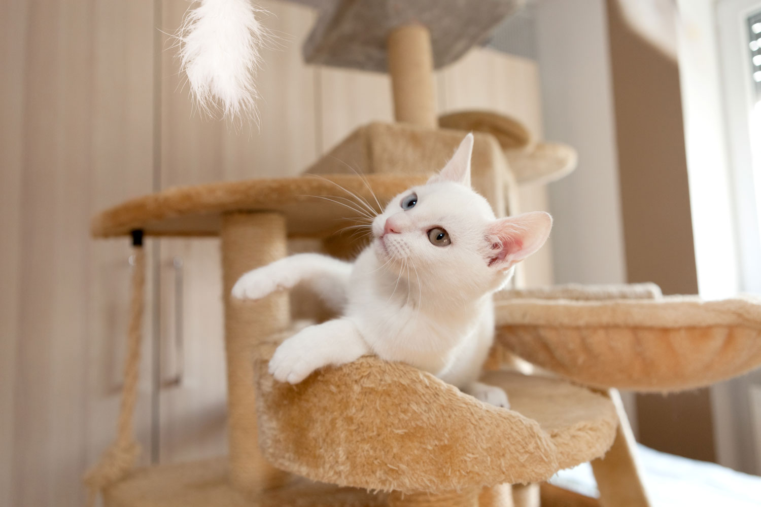 AA beautiful unicolored cat lying on a small playing platform while staring at the camera, 9 Types Of Cat Furniture To Know