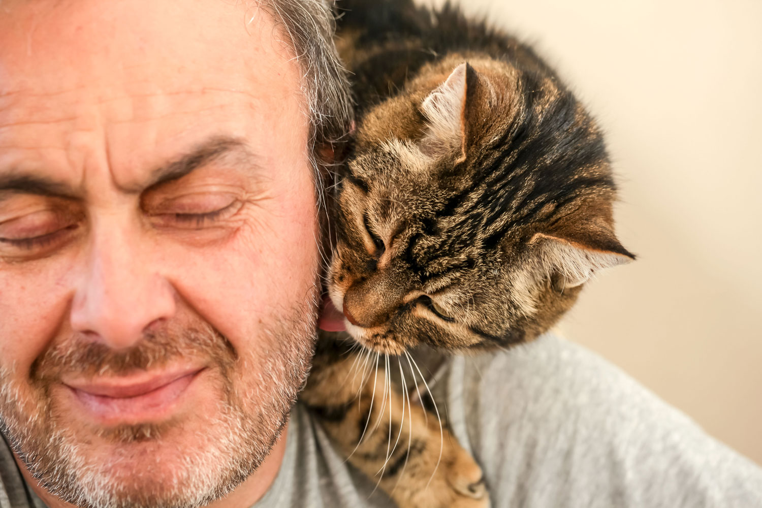 A cute tabby cat licking the beard of his owner, Why Does My Cat Eat And Chew My Hair?