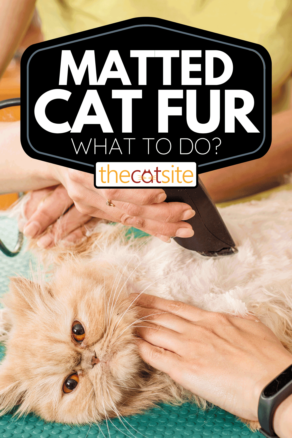 Grooming cat with tool for shedding hair, Matted Cat Fur - What To Do?