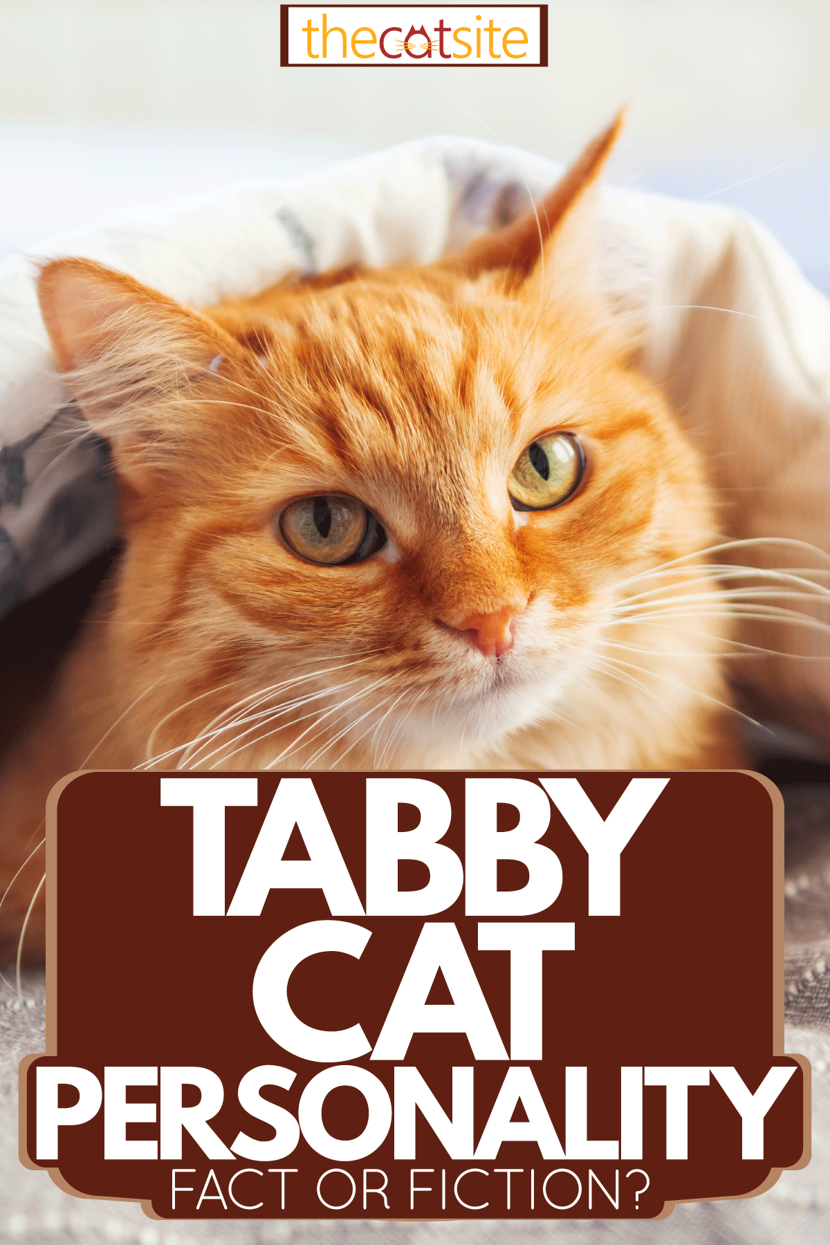 An orange tabby cat peeping out of the blanket, Tabby Cat Personality: Fact or Fiction?