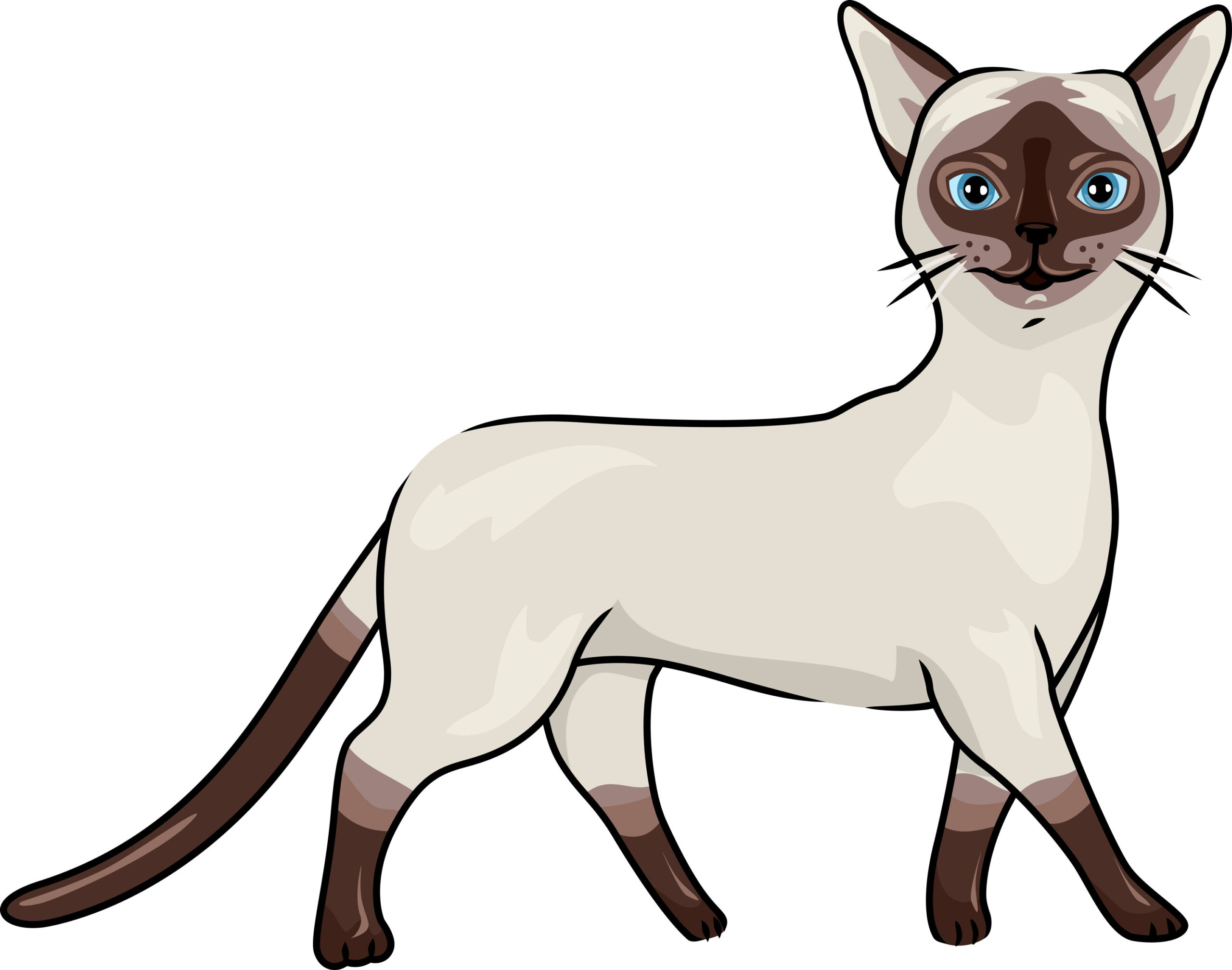 A Siamese cat drawing on a white background