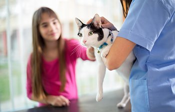 Harness And Leash Training For Cats The Cat Site
