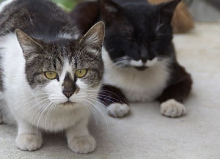 How To Help An Abused Cat Recover | TheCatSite