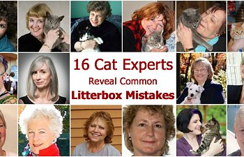 16 Experts Reveal The Most Common Litterbox Mistakes (and How To Avoid Them)