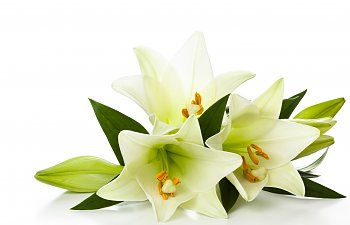 Cats & Lilies: Avoid The Danger Lurking In Your Home