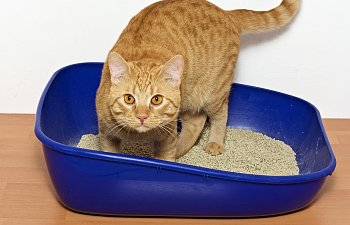 The Litterbox: What Every Cat Owner Needs To Know