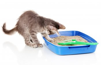 The 10 Most Common Litterbox Mistakes Cat Owners Make