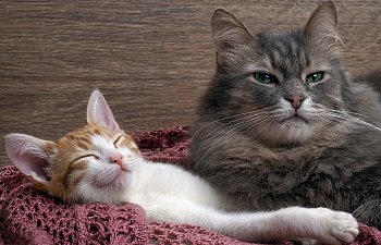 A Kitten Or An Older Cat - Which Should You Adopt?