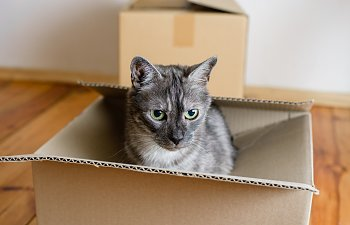 How To Move With Your Cat To A New Home In A Safe Way
