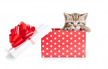 Should I Get A Kitten As A Gift For My Kids?