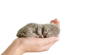 Are You An Expert On Newborn Kitten Rescue?