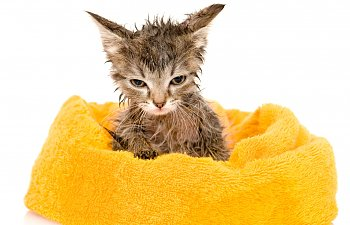 How To Bathe Small Kittens The Safe Way