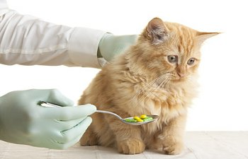 Anti-anxiety Medication For Cats