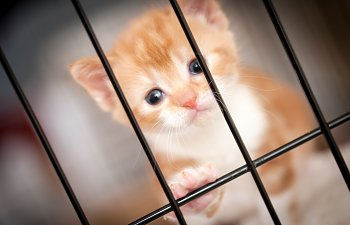 Identifying Common Ailments In Cats Adopted From Animal Shelters And Rescue Groups