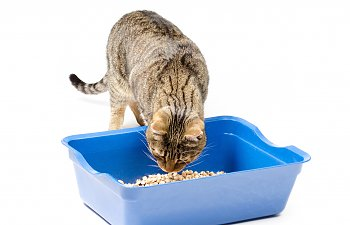 How Often Should You Clean The Litter Box?