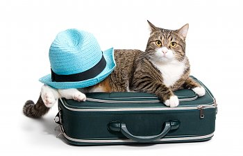 What Would Be Your Cat's Fantasy Vacation?