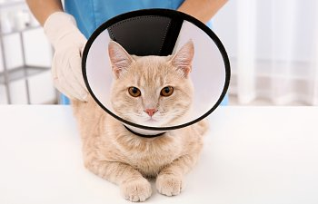 The Cat Cone: A Complete Owner's Guide