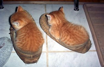 21 Photos Of Shoe-obsessed Cats That Will Make You Laugh