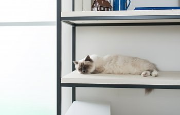 How To Make Your Home Bigger (at Least For Your Cats)