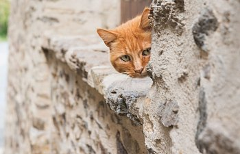 Quiz: What Do You Know About Feral Cats?