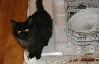 You Won't Believe How Helpful Cats Can Be Around The House!