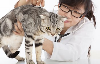 Quiz: Would You Make A Good Veterinarian?