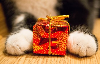 Quiz: Which Cat-themed Gift Best Fits Your Personality?