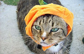 21 Dressed-up Cats That Will Make You Laugh This Halloween
