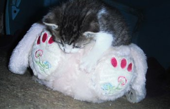 Feline Toy Story: 21 Sweet Cats With Their Soft Furriends