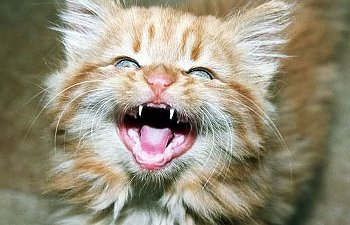 23 Derpy Cat Smiles That Will Brighten Up Your Day