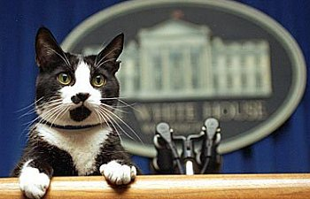 Cats In The White House