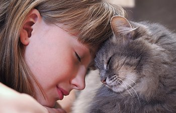 The Secrets Of The Feline Human Bond