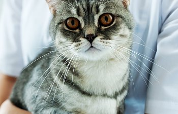 Elevated Liver Enzymes In Cats - Should You Be Worried?