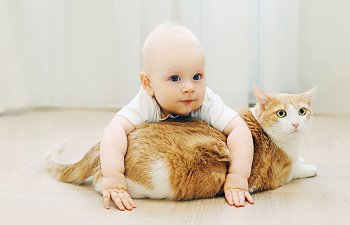 Cats And Babies: All Your Questions Answered!