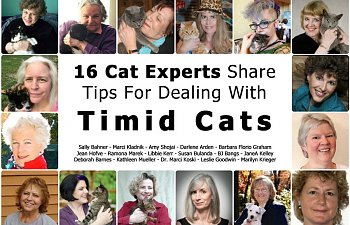 16 Top Cat Experts Share Tips For Dealing With Timid Cats