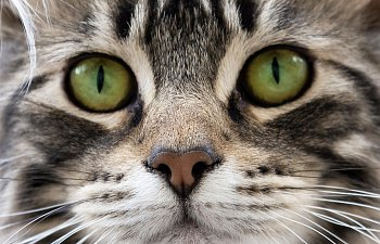 The Healthy Cat: Eight Things You Should Check