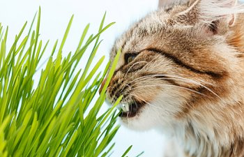 Cat Grass: How To Create The Purrfect Garden For Your Cat