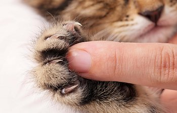 How To Best Take Care Of Cat Claws