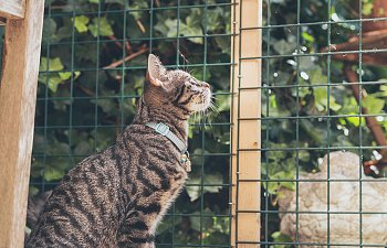 How To Keep Your Cat Safe Outdoors