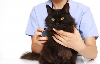 Cat Vet Checkup - What To Expect