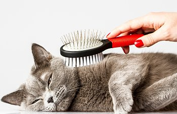 7 Reasons Why You Really Should Groom Your Cat Regularly