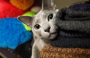 Cat Behavior For Beginners