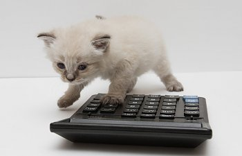 calculate cat food.jpg