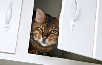 Cats And Hidden Dangers In The Home