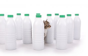 Household Chemicals And Your Cats