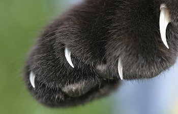 Declawing - More Than Just A Manicure